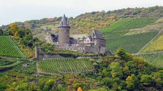 Tout savoir sur les vins et les vignobles de Provence