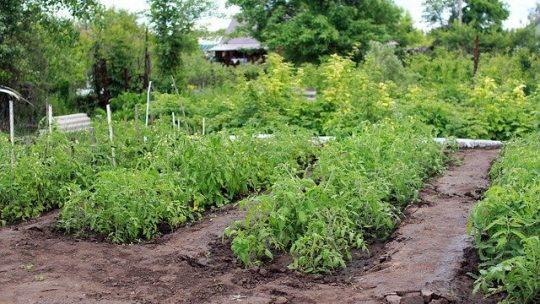 Comment commencer à cultiver sa propre nourriture?